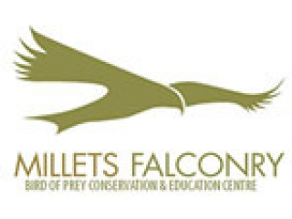 millets falconry