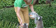 Keeper feeding animals